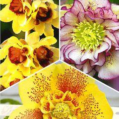 1600 Stück Gelbes Gänseblümchen Blumensamen Hausgarten Pflanzen Gartendekoration