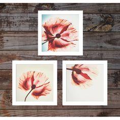 A set of 3 Fine art photography. Modern Coral Pink by AylilAntoniu