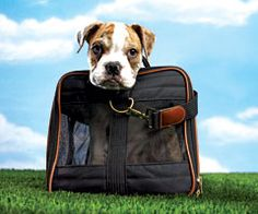 finding a hotel when traveling with dogs