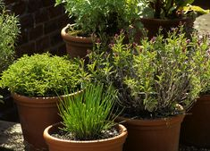 Watering of Your Vegetable Organic Garden Garden Planters, Herb Garden, Vegetable Garden, Perennial Vegetables, Pot Jardin, Gardening Magazines, Aromatic Herbs, Plantar, Plantation