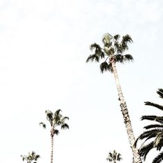 palms are everything