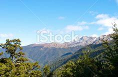 Mt Arthur, The Kahurangi National Park, New Zealand Royalty Free Stock Photo Beech Tree, Photo Tree, Image Now, New Zealand, National Parks, Scenery, Southern, Royalty Free Stock Photos, Travel