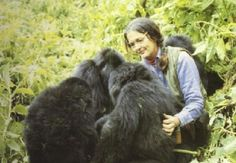 another woman whose work with primates inspires me -- Dian Fossey