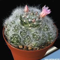 Cactus House Plants, Cactus Art, Cacti, Flowers, Urban, Beautiful, Succulents, Plants, Cactus Names