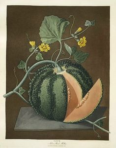 George Brookshaw, Silver Rock Melon, 1812. George Brookshaw (c. 1751-1823), also known as G. Brown, was a notable English painter and illustrator from London.