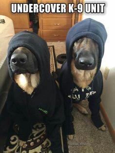 Lol! Gotta love the undercover K-9 unit