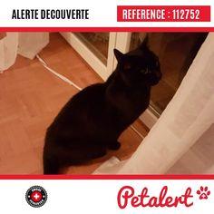 Cette Alerte est désormais close : elle n'est donc plus visible sur la plate-forme www.petalert.ch.  L'animal a pu être remis à son propriétaire Merci pour votre aide. Visible, Aide, Cats, Switzerland, Thanks, Shape, Animaux, Gatos, Kitty Cats