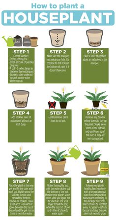 If your plant has grown in the same soil for years, then it's time for a fresh start. Learn how to repot your houseplant. Printable PDF instructions included at the link. Indoor Garden, Garden Plants, Indoor Plants, House Plants Decor, Plant Decor, Household Plants, Keramik Design, Growing Plants Indoors, Inside Plants