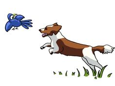 dog chasing bird #dog #dogs #springer #spaniel #dogtraining #dogtrainingsos #puppy #puppytraining #dogart #doglovers #dogbehaviour