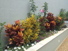 A beleza das cores com os lindos Crotons, Projeto Marcelo Gizotti.