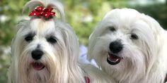 Bibissimi   Abbigliamento, accessori e pasticerria per cani