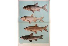 Fish Science Poster