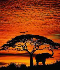 """Résultat de recherche d'images pour """"elephant dans un couché de soleil"""""""