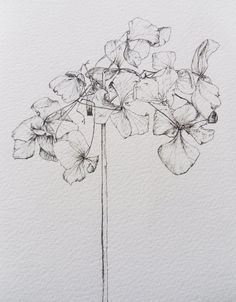 Holly Wilcox. The use of just one colour and very fine lines almost creates a very fragile, translucent effect that makes this drawing very delicate.