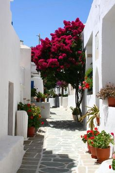 White-washed street of Folegandros island , Greece Places Around The World, Oh The Places You'll Go, Places To Travel, Places To Visit, Around The Worlds, Beautiful Islands, Beautiful World, Beautiful Places, Myconos