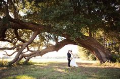 I think it would be cool to get married under this tree