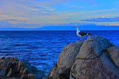 A Seagull taking in the beautfiul sunset.