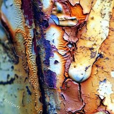 .patina - rust - peeling paint - beautiful decay