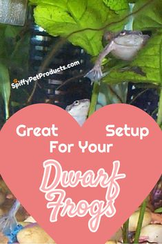 Dwarf Frogs For Your Great Setup Dwarf Frogs, Frog Tank, Pet Frogs, Marine Tank, Gift Guide For Him, Diy Tank, Pet Fish, Pet Care Tips, Animal Projects