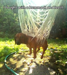 25 Hilarious Dog Memes To Crack You Up This Morning - World's largest collection of cat memes and other animals Funny Animal Memes, Dog Memes, Cute Funny Animals, Funny Animal Pictures, Funny Cute, Dog Pictures, Funny Dogs, Hilarious, Funny Humor