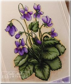 Sweet Violets rubber stamp by Flourishes, colored with Copic markers, she explains the coloring method very well Botanical Art, Botanical Illustration, Watercolor Flowers, Watercolor Paintings, Sweet Violets, Flower Sketches, Birth Flowers, China Painting, Copics