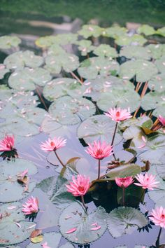 Lilly pads at a Thailand destination wedding. Photo: Corbin Gurkin