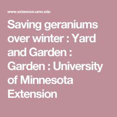 Saving geraniums over winter : Yard and Garden : Garden : University of Minnesota Extension