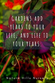 """Gardens add years to your life, and life to your years."" ~Unknown ""Gardens add years to your life, and life to your years. Garden Club, Garden Art, Gardening For Beginners, Gardening Tips, Gardening Scissors, Gardening Vegetables, Vegetable Garden, Urban Gardening Berlin, Garden Wallpaper"