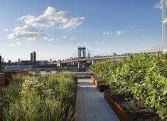 Galeria de James Corner Field Operations projeta cobertura jardim no Brooklyn, Nova Iorque - 4