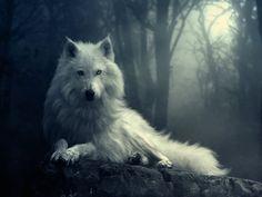Regal White Wolf