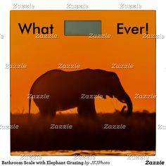Shop Bathroom Scale with Elephant Grazing created by JFJPhoto. You Fitness, Fitness Goals, Workout Regimen, Inspirational Message, My Images, Scale, Elephant, Bathroom, Weighing Scale