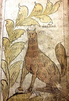 В иллюстрациях к рукописи XVII века книжник изобразил зверей. Обычных, лесных. Так, как они выглядели. А потом они измельчали и обеззубели. А вообще с этими образами надо мультфильм сделать.