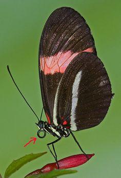 Projecte: Les Papallones P4. Proyecto: Las Mariposas P4   El Meu Bloc Educatiu. Mi Blog Educativo