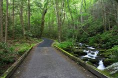 What to Expect When Visiting the Roaring Fork Motor Nature Trail in the Smoky Mountains http://www.parksidecabinrentals.com/blog/roaring-fork-motor-nature-trail-smoky-mountains-planned-close/