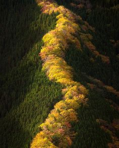 A calm morning in Namego Valley // Photography Takeshi Wakabayashi #japan # Autumn leaves # Namego Valley