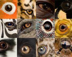 Schilderij ogen van de wereld