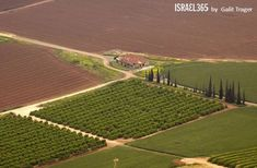 The lush abundance of Israel's farming land is beautifully captured in today's photo, by Galit Trager.