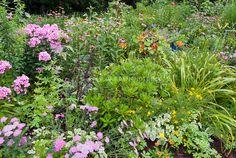 Flower gardening: Yarrow achillea, phlox, Echinacea, daylilies, nasturtiums, petunias, dahlias, lupines, coreopsis, cottage garden mix of annuals and perennials.