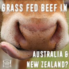 I was talking to an Australian Doctor at the Ancestral Health Symposium about finding grass fed meat in Australia. He was explaining to me that Australian meat is almost all grass fed, unlike Ameri…