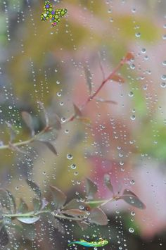 """A Kindred Spirit """"Pırıl pırıl gökkuşağını görmek için önce yağmuru yaşamak gerekir.""""<br> Walking In The Rain, Singing In The Rain, Rainy Night, Rainy Days, Rain Photography, Street Photography, I Love Rain, Sound Of Rain, Dew Drops"""
