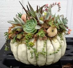 lush and full. Anemone shell Especially lush and full. -Especially lush and full. Succulent Centerpieces, Pumpkin Centerpieces, Succulent Arrangements, Floral Arrangements, Centerpiece Wedding, Succulent Gardening, Planting Succulents, Planting Flowers, Succulent Planters