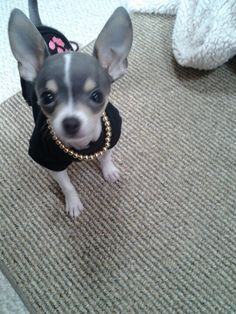 Kiki looking pretty♡
