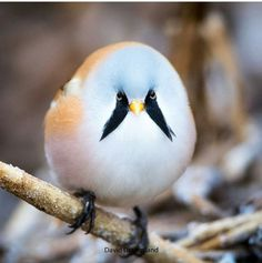 Find and save ideas about Colorful birds, Pretty birds, Beautiful birds and Tropical birds. Cute Birds, Pretty Birds, Beautiful Birds, Animals Beautiful, Beautiful Smile, Pretty Animals, Funny Birds, Beautiful Images, Cute Baby Animals