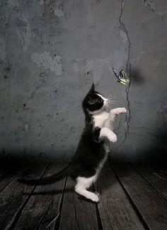 Chasing #cat