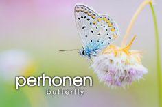 perhonen ~ butterfly