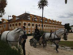 Real Escuela Andaluza del Arte Ecuestre, Jerez de la Frontera, Cádiz, Andalucía, Spain