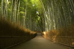 Get dwarfed by nature on Bamboo Street in Kyoto.