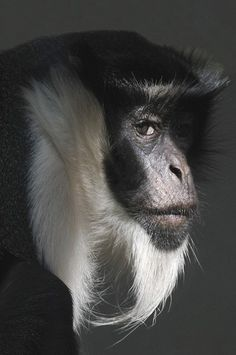 great looking monkey