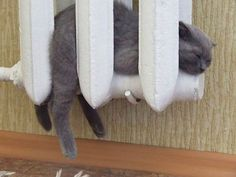Perfect Place To Take A Nap | Bored Panda