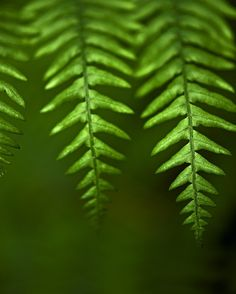 photo of fern leaves